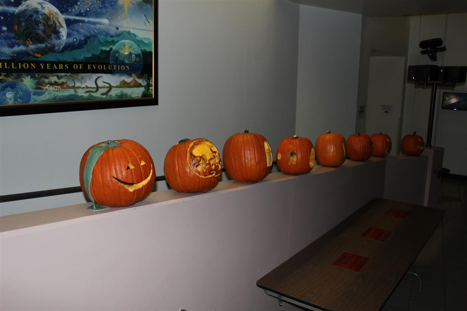 All pumpkins in Steward